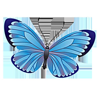 Identifying Butterflies