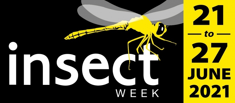 Insect Week 2021