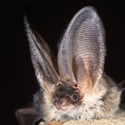 Bat Quiz