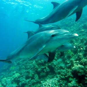 Quiz 7 - Dolphin image