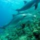 Quiz 6 - Dolphin image