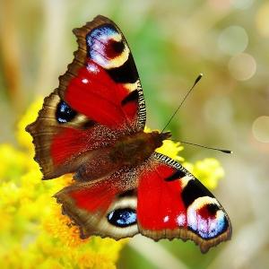 Quiz 6 - Butterflies